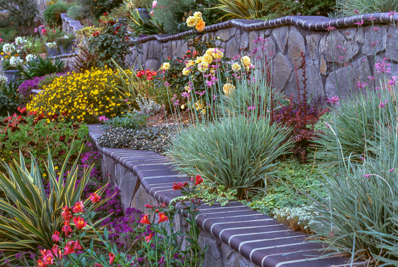Hillside garden with undulating retaining walls and drought tolerant perennials