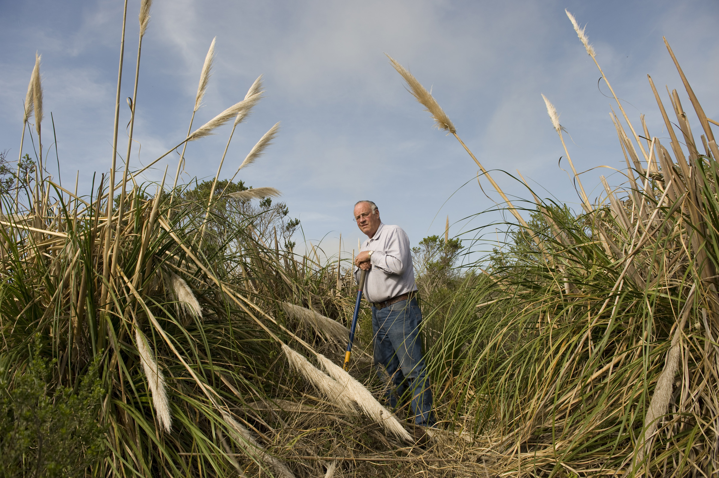 pampas grass (Cortaderia selloana) in San Mateo County with farmer B.J. Burns