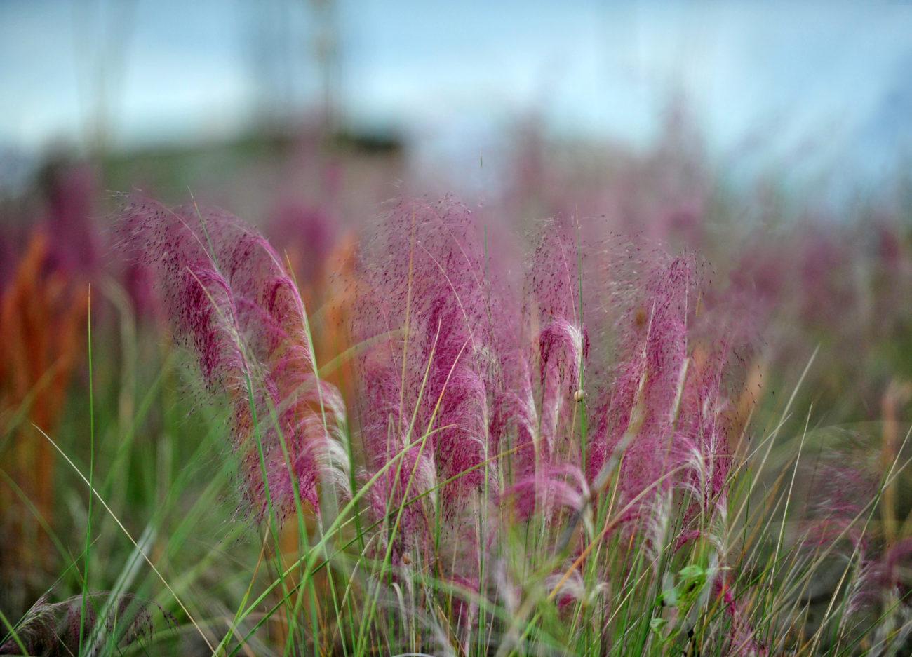 Как сделать розовую траву на фото