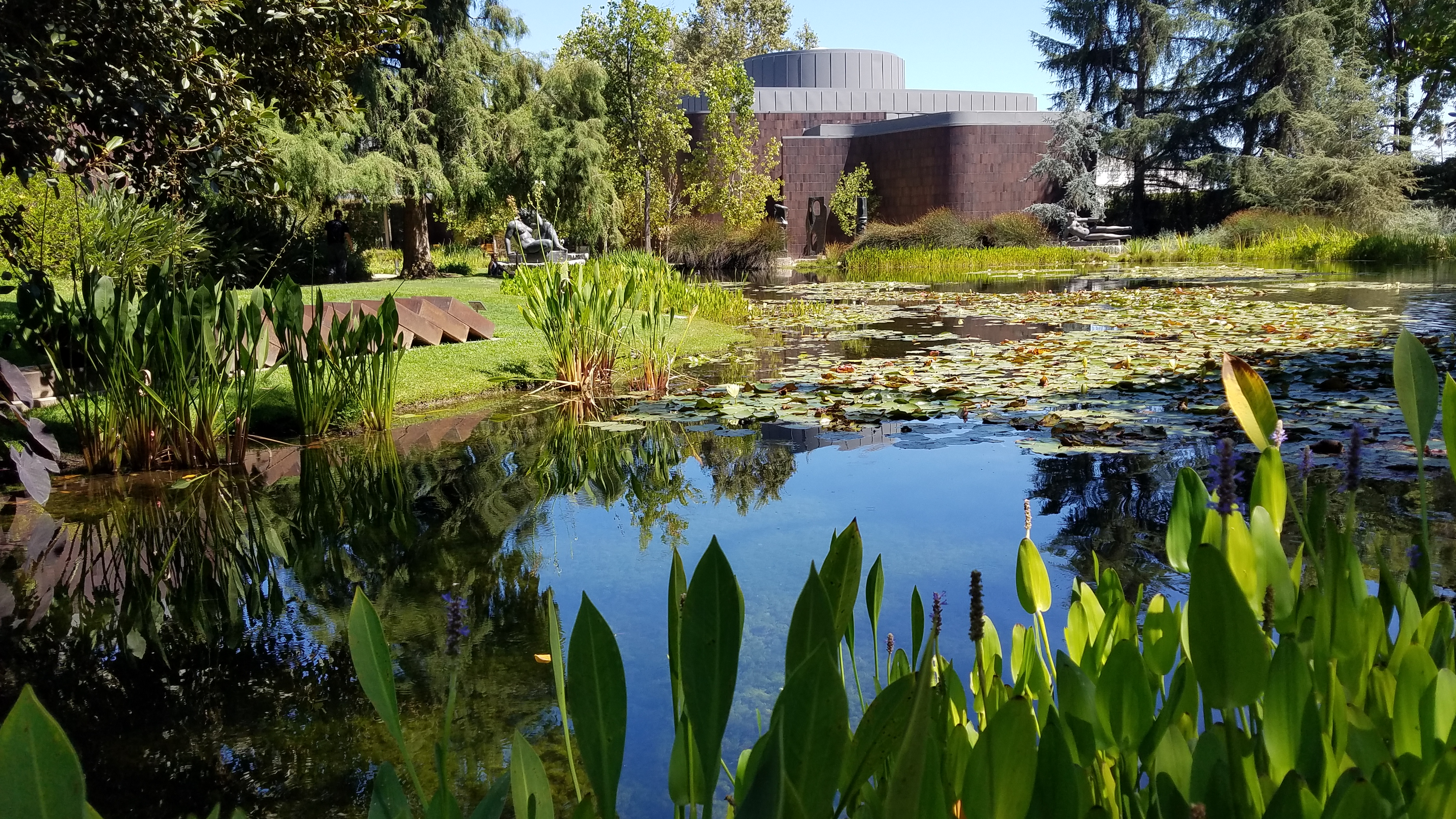 Pond with water lilies and pickerel weed