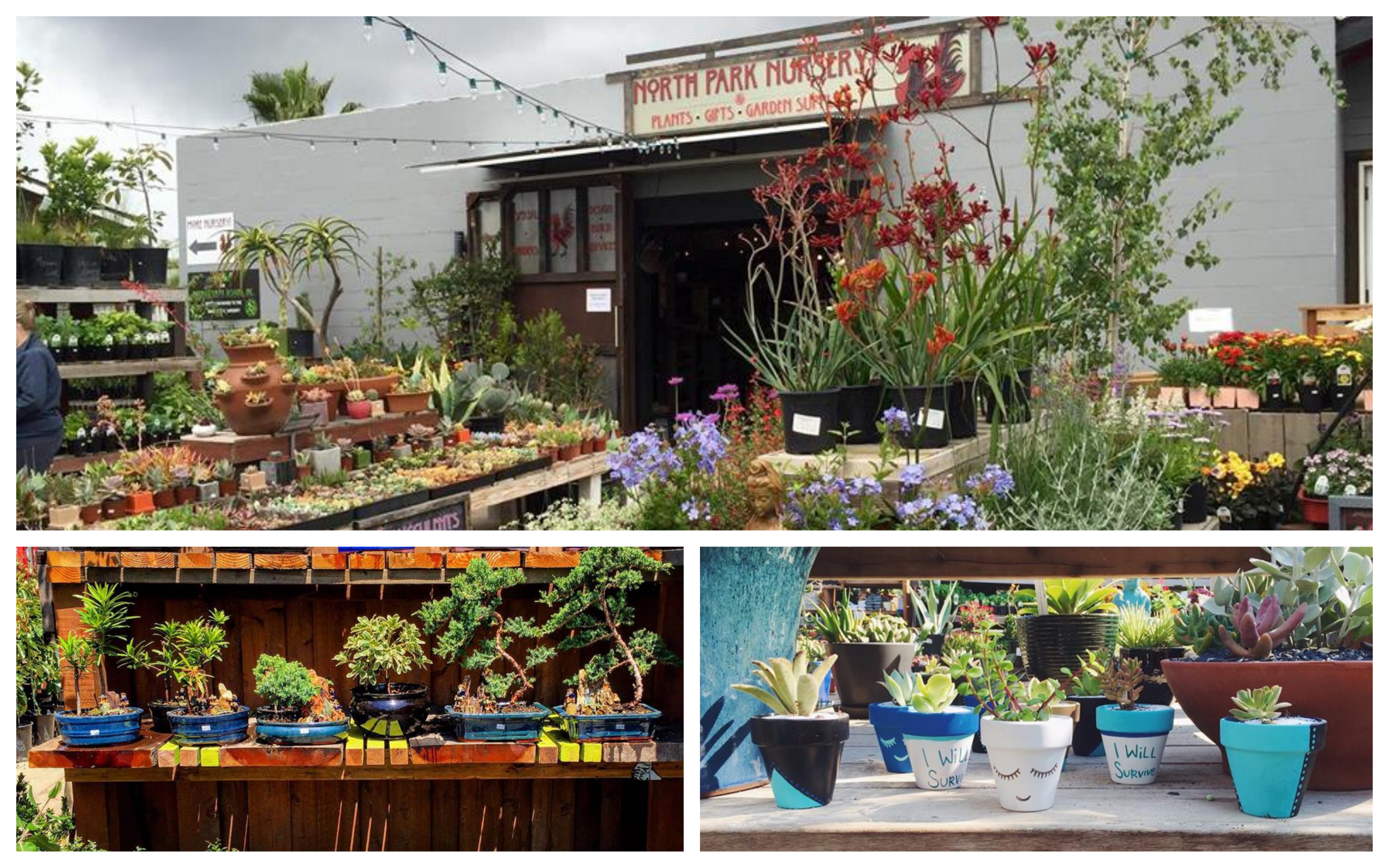 Introducing Our 6 Newest Retail Nursery